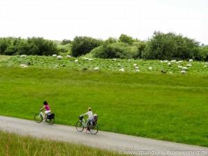 Radfahren hinterm Deich (2 von 2)