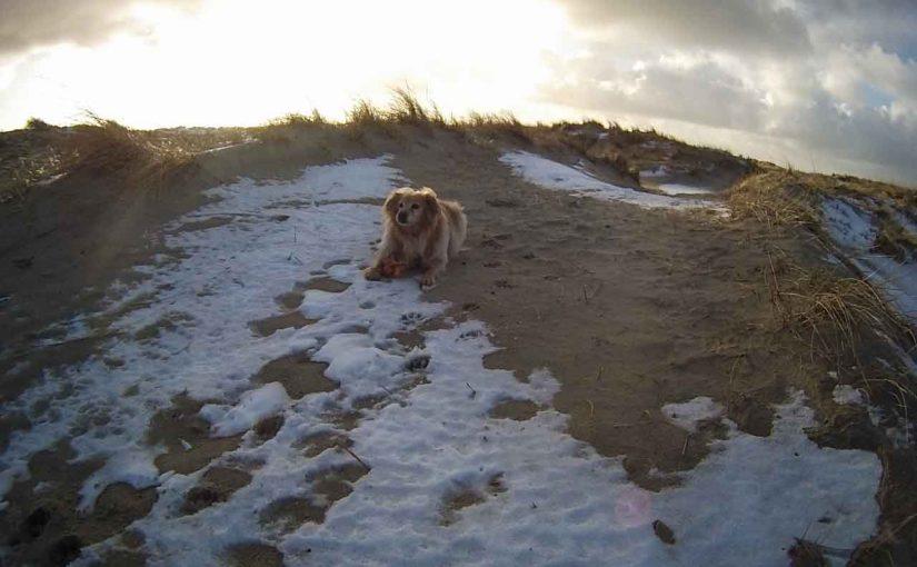 Panini berichtet: Winterurlaub auf Borkum