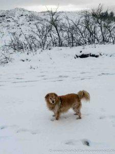 Panini Winter Borkum (5 von 5)